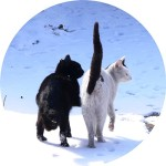 co 2 koty - Michał