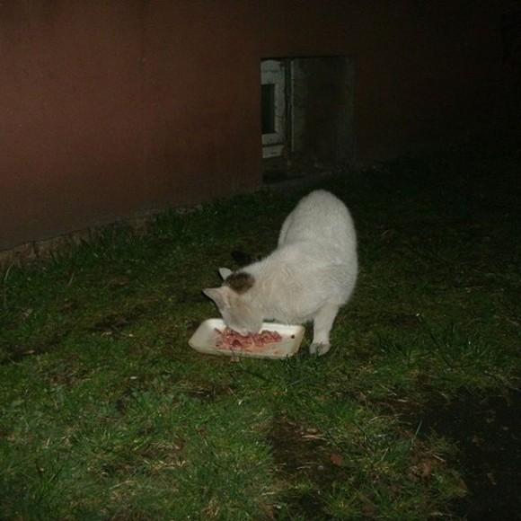 Koty Małgosi