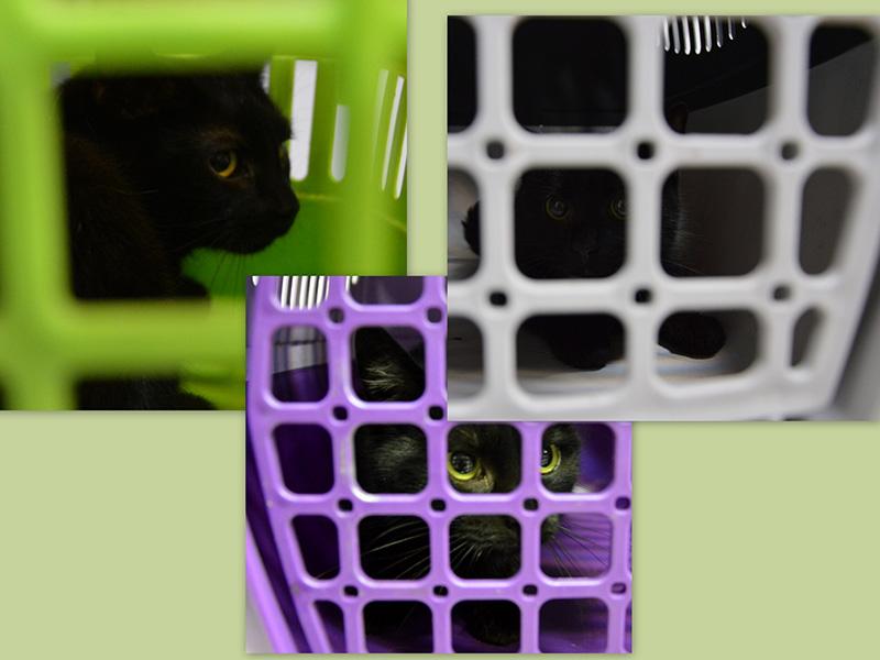 Kolejne sterylizacje kotów z Bytomia-Bobrka