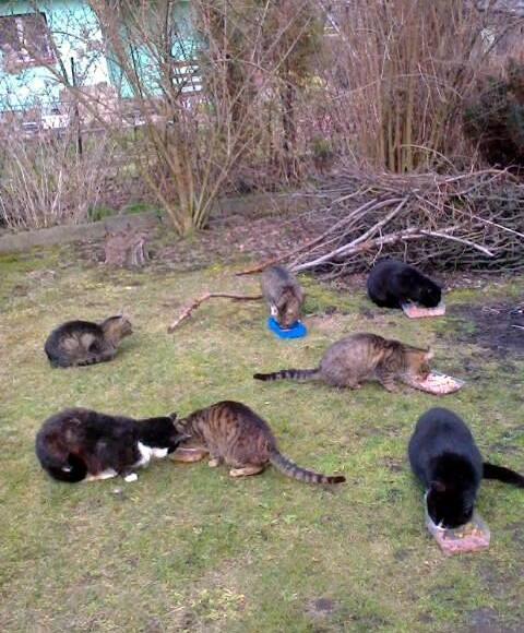 Koty Sabiny