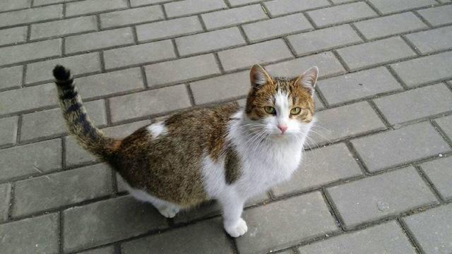 Szczęśliwe zakończenie historii kotki wolno żyjącej