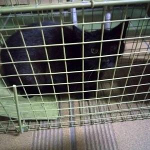 Sterylki kotów, adopcja Oskara i ranna Zula z działek