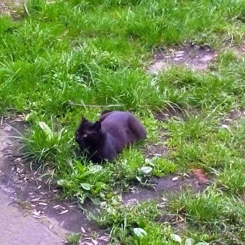 Koty pana Piotra