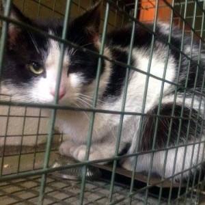 Sterylizacje kotów, leczenie skóry i Targ Staroci