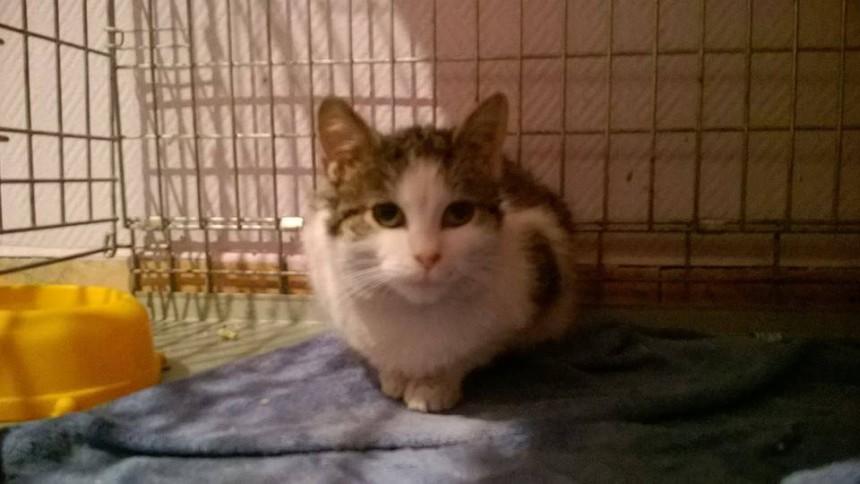 Leczenie ogrodowej koteczki