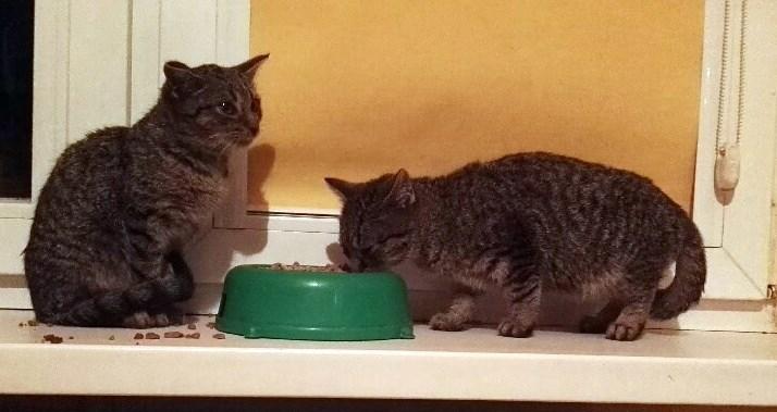 Wyrzucone na mróz kociaki