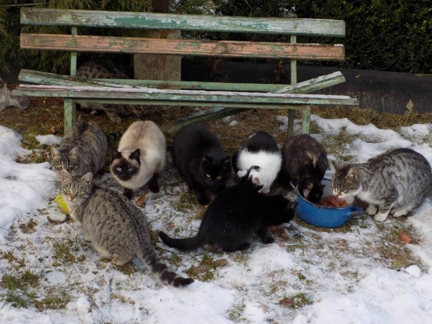 Sterylki kotów z ogródków Winograd