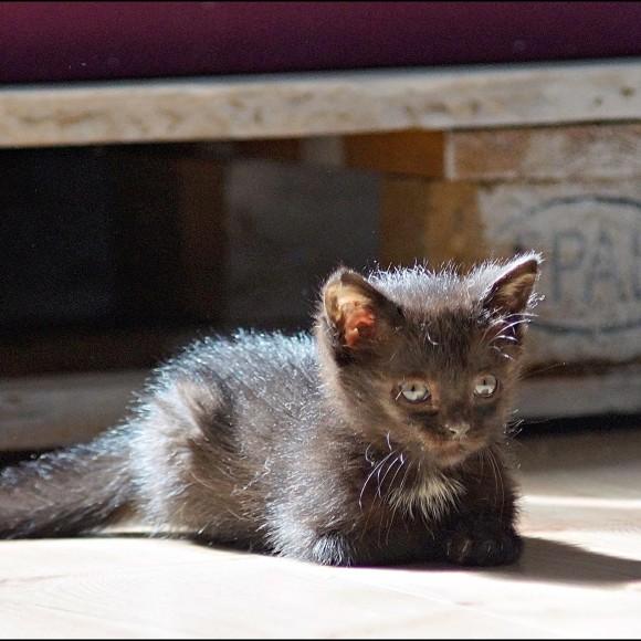 Kociaki czarne