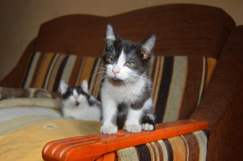Kociaki bikolor