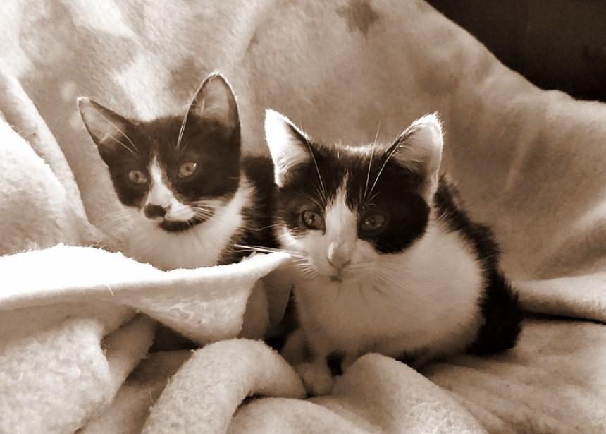 Panleukopenia zabrała kociaki
