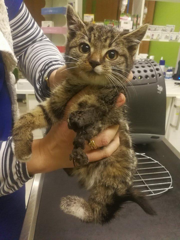 Mała kotka z urwaną łapką