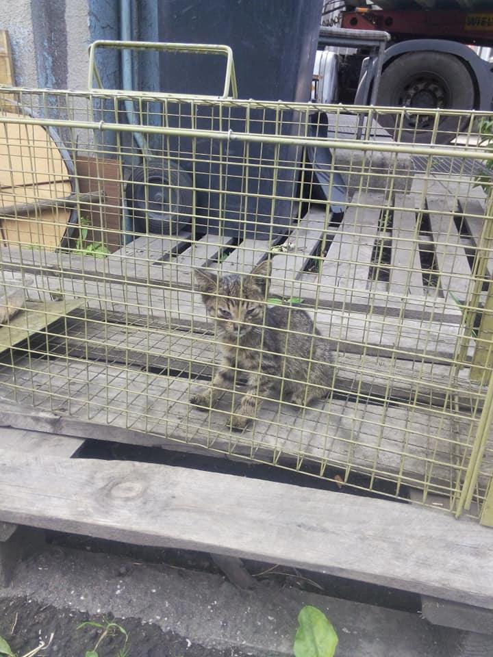 Kociaki z huty