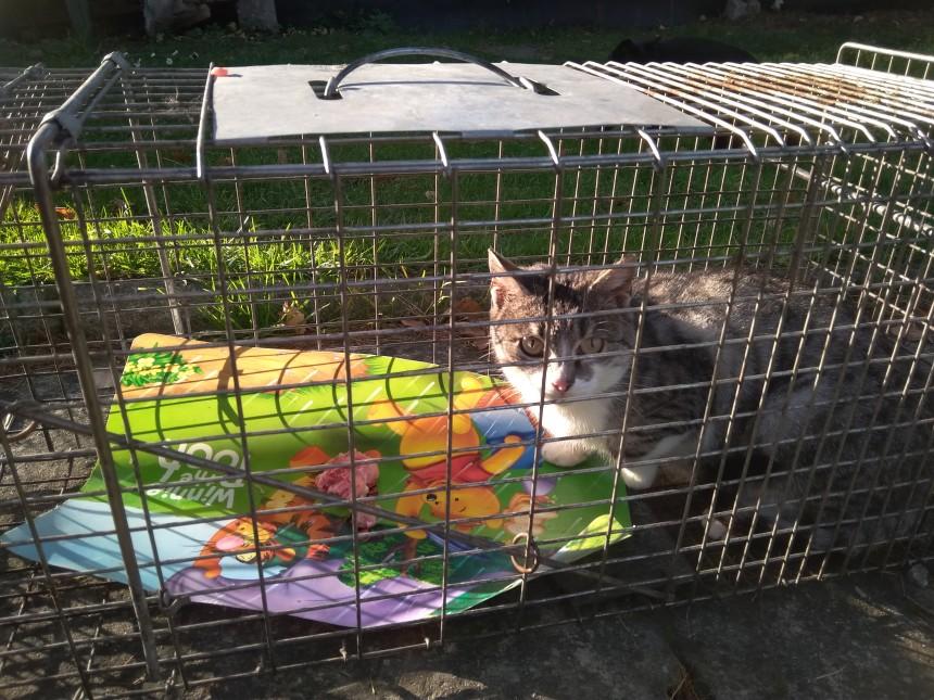 Sterylizacja ma sens! Kolejne koty po zabiegach