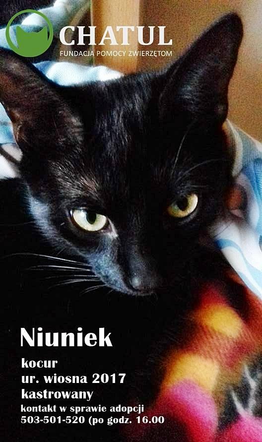Niuniek