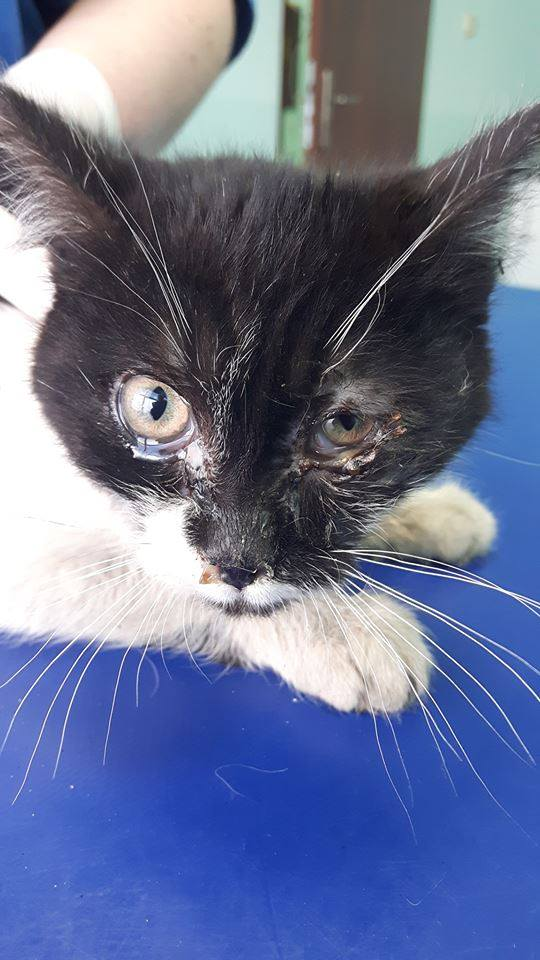 Kolejna kotka na leczeniu