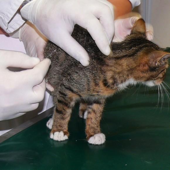 Pomóż nam chronić koty
