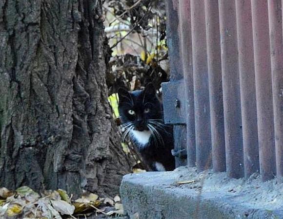 Koty z Bobrka