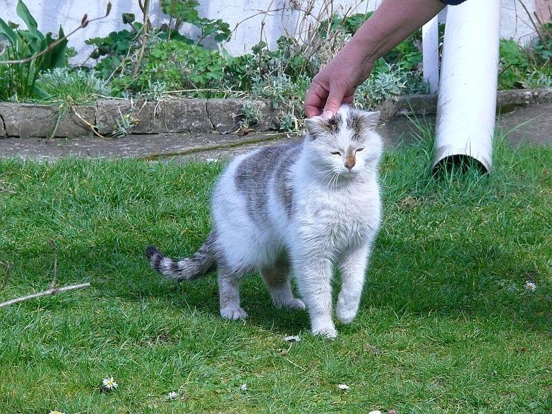 Koty Urszuli