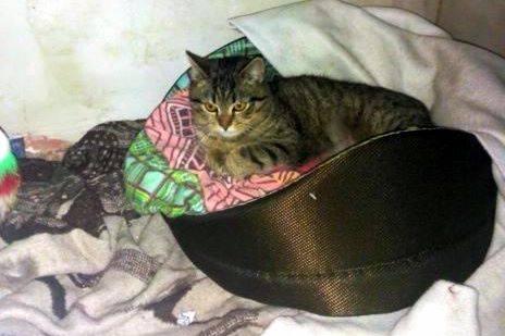 Kociak Oskar wraca do zdrowia