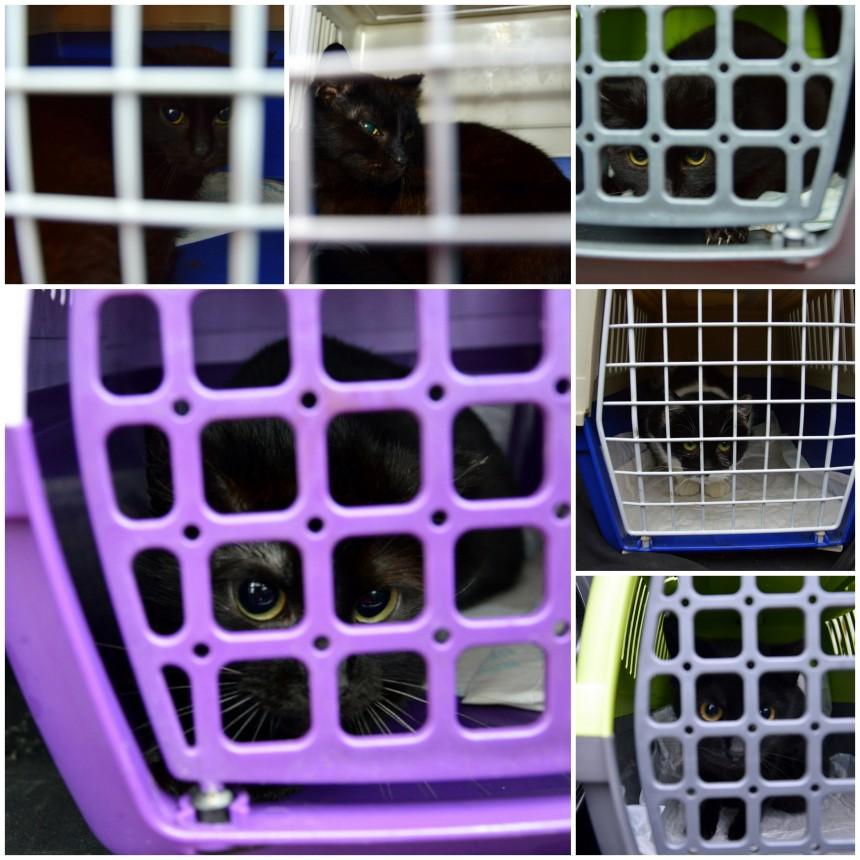 Kolejne kocice wysterylizowane