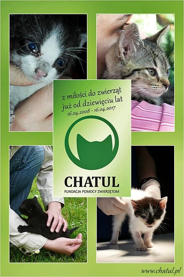 9. urodziny CHATULA!