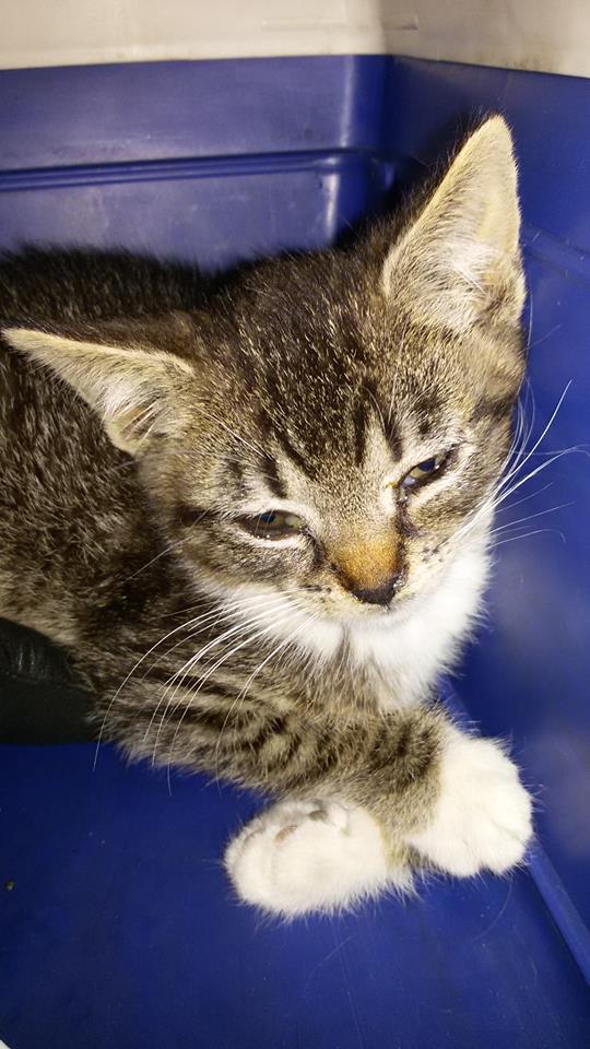 Kolejne kociaki uratowane