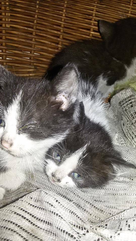 Kociaki z koszmarnej piwnicy