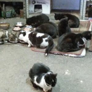 Stado kotów z warsztatu