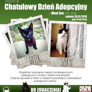 Dzień adopcyjny w Maxi Zoo Bytom