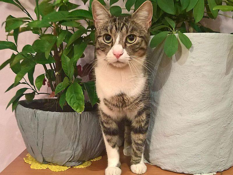 Rośliny trujące dla kotów.
