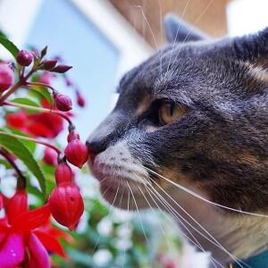 Rośliny bezpieczne dla kotów.